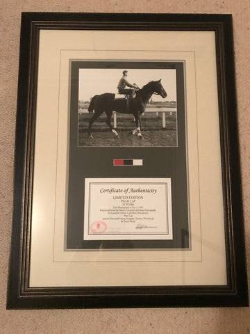Framed Limited edition of Phar Lap at work with Tommy Woodcock