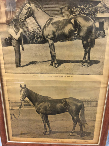 3. Framed - Merloolass - Sydney Cup winner 1898