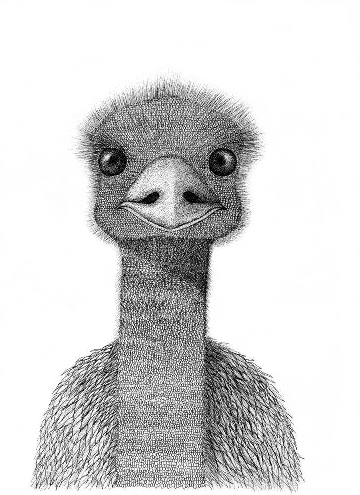 A4 Animal Illustration Prints - Emu