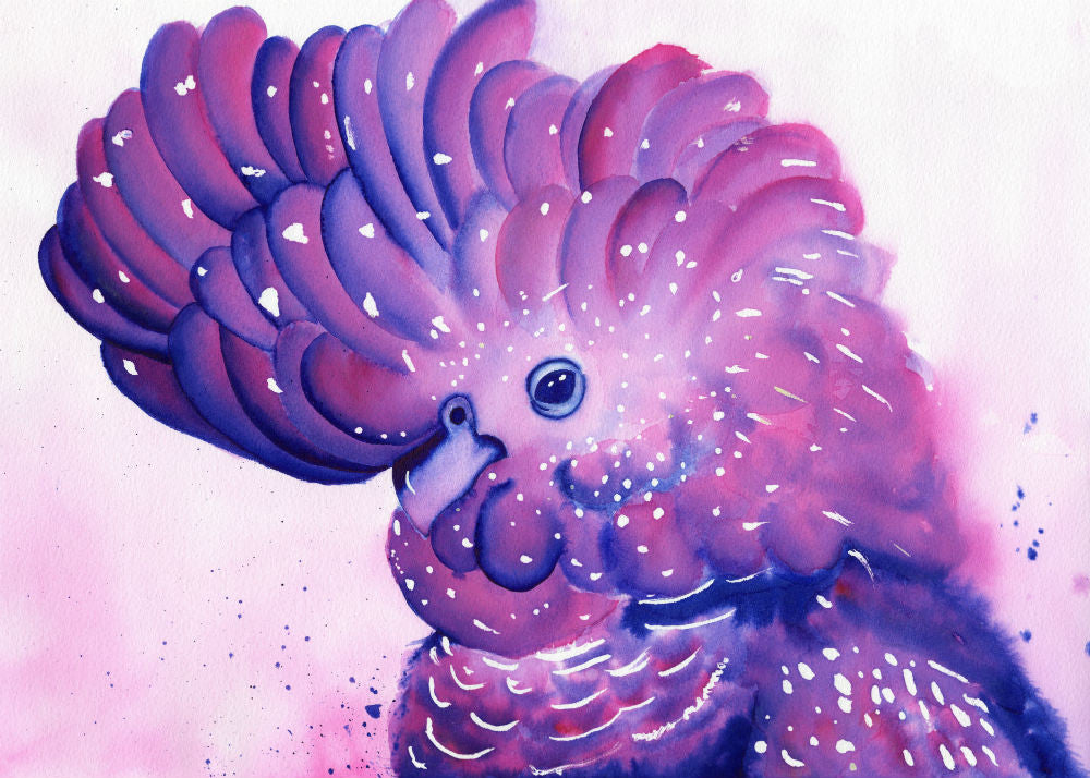 Not so Black Cockatoo Watercolour Giclee Print