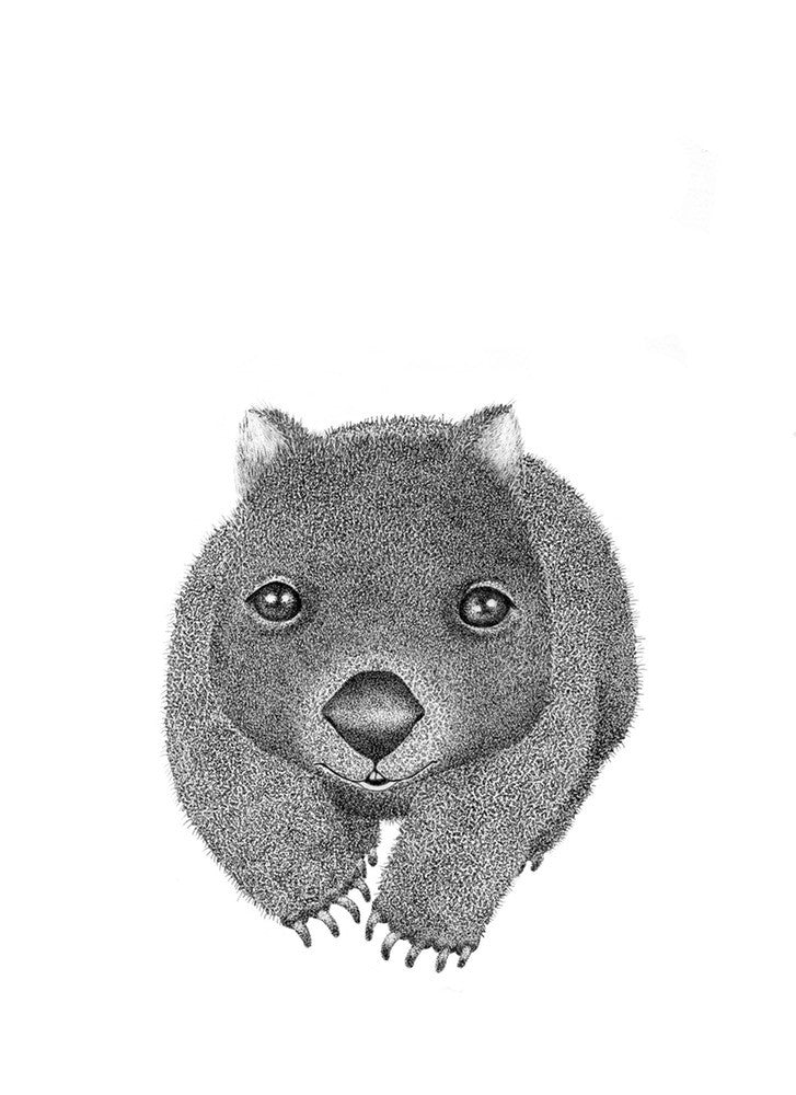 A4 Animal Illustration Prints - Wombat