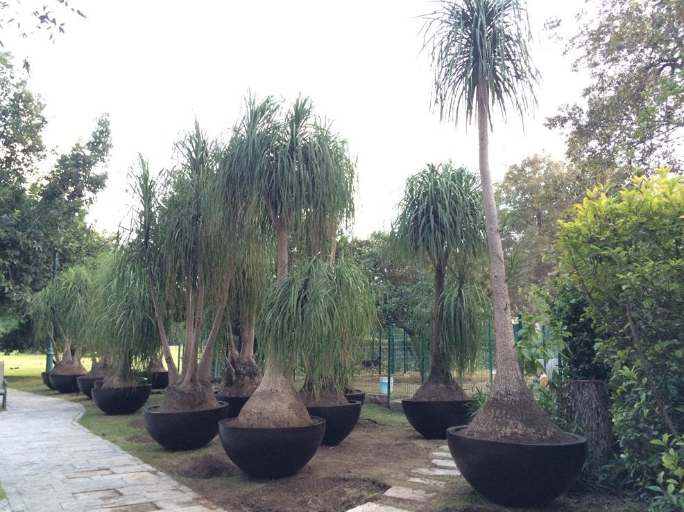 Fiberglass planters manufacturer discount quality great big large planters garden decoration