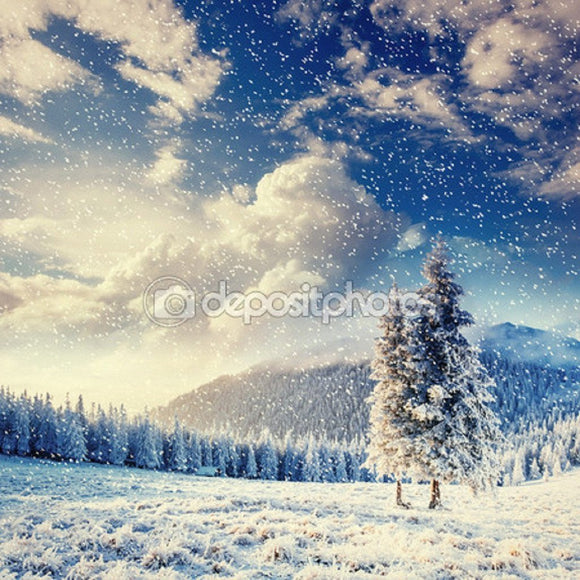 Landscape Winter Snow Trees  Backdrop