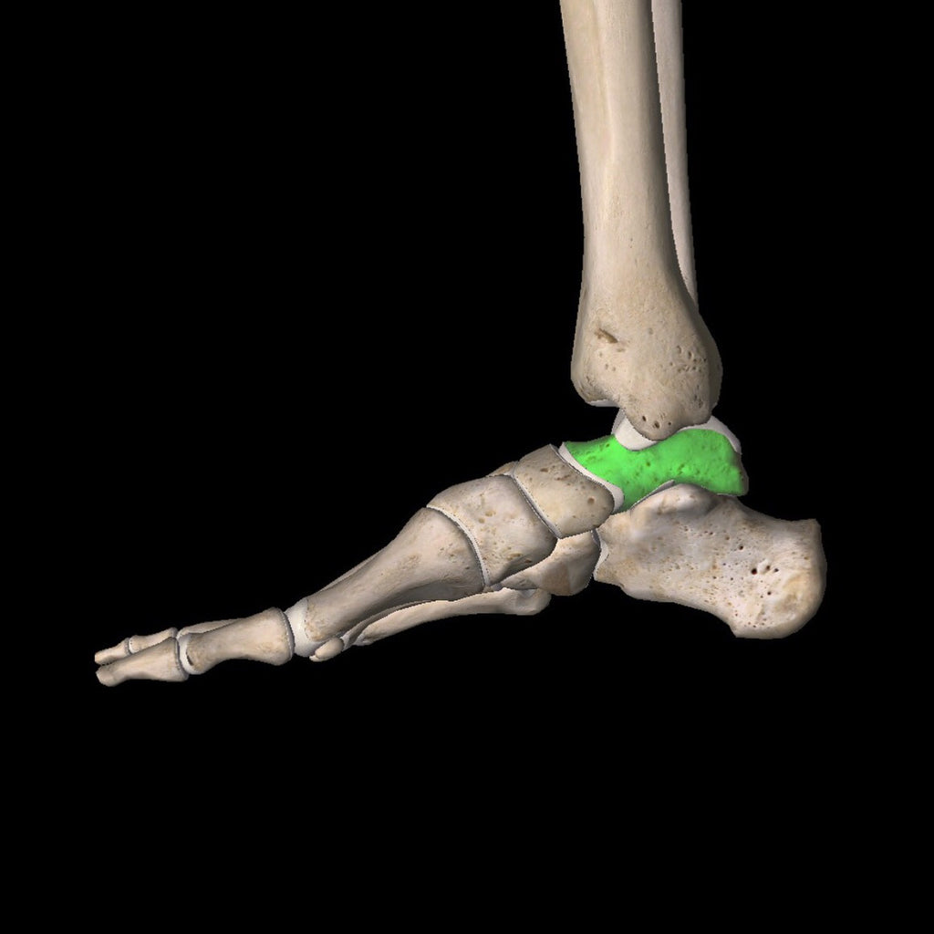 Foot Alignment