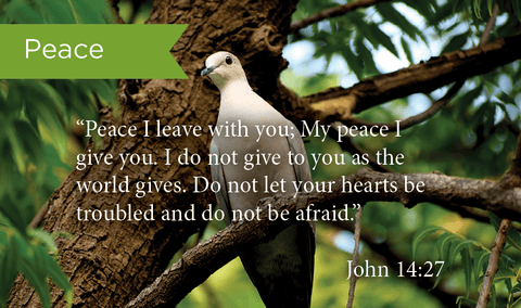 Pass Along Scripture Cards, Peace, John 14:27, Pack 25 - Logos Trading Post, Christian Gift