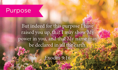 Pass Along Scripture Cards, Purpose, Exodus 9:16, Pack 25 - Logos Trading Post, Christian Gift