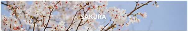 Introducing: The Sakura Collection