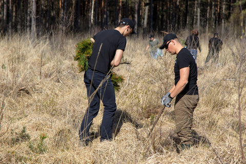 Tree planting in Latvia