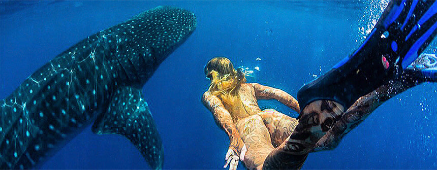 Baja whale shark snorkeling diving