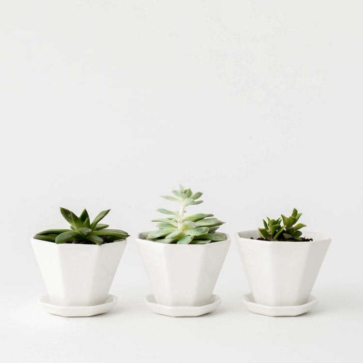 Mini Octagon Planter