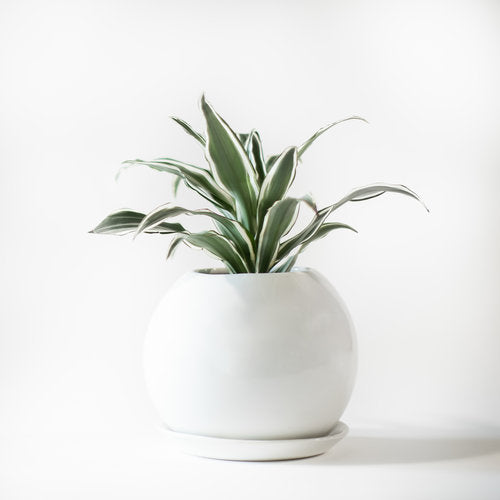 Minimal Curved Planter