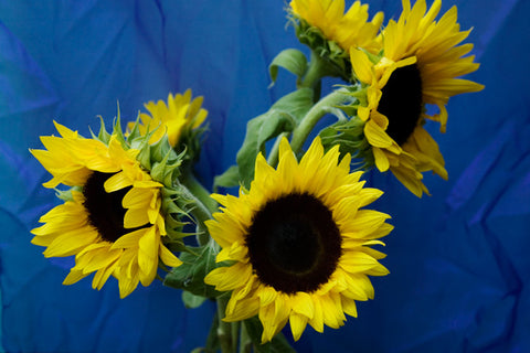 Sunflower On Blue Set of 4 Placemats