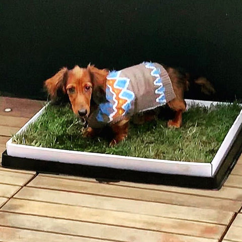 dog potty pad