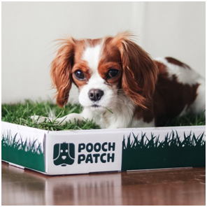 indoor grass for dogs