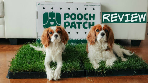 Reasons your Pooch-Patch Products are Best Picks