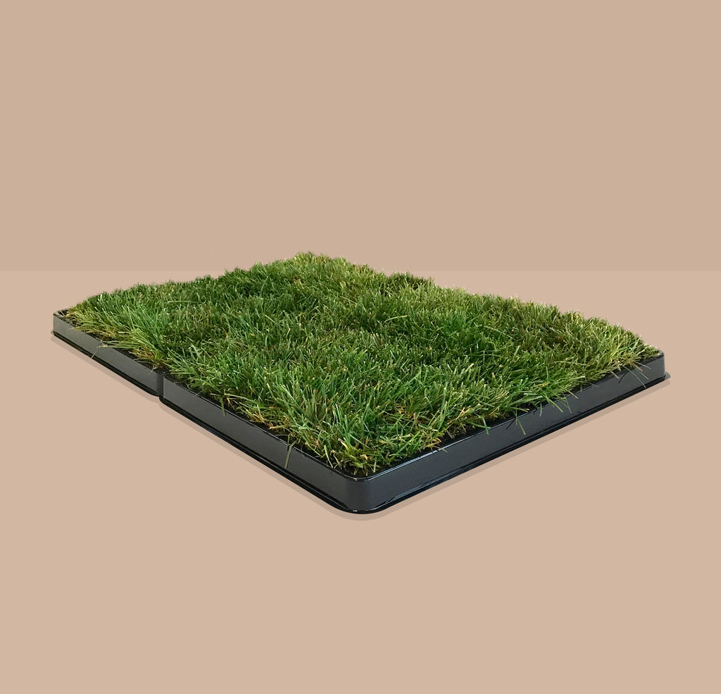 pee pads,potty pads,best artificial grass for dogs