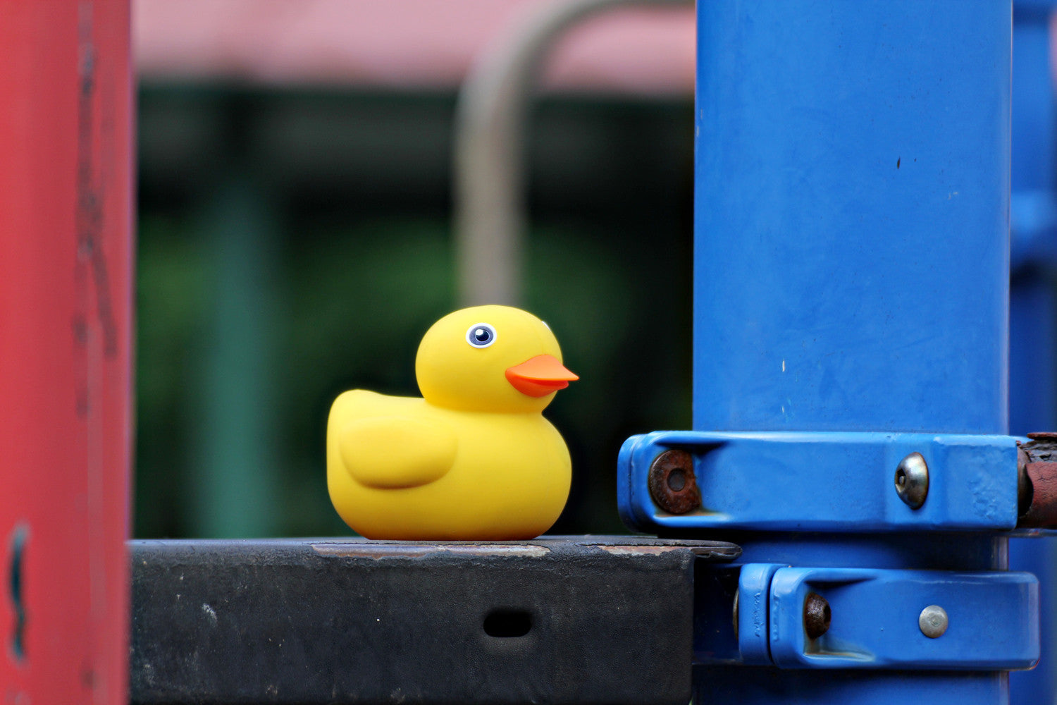 5 Fun Outdoor Activities: Take Edwin the Duck Outside