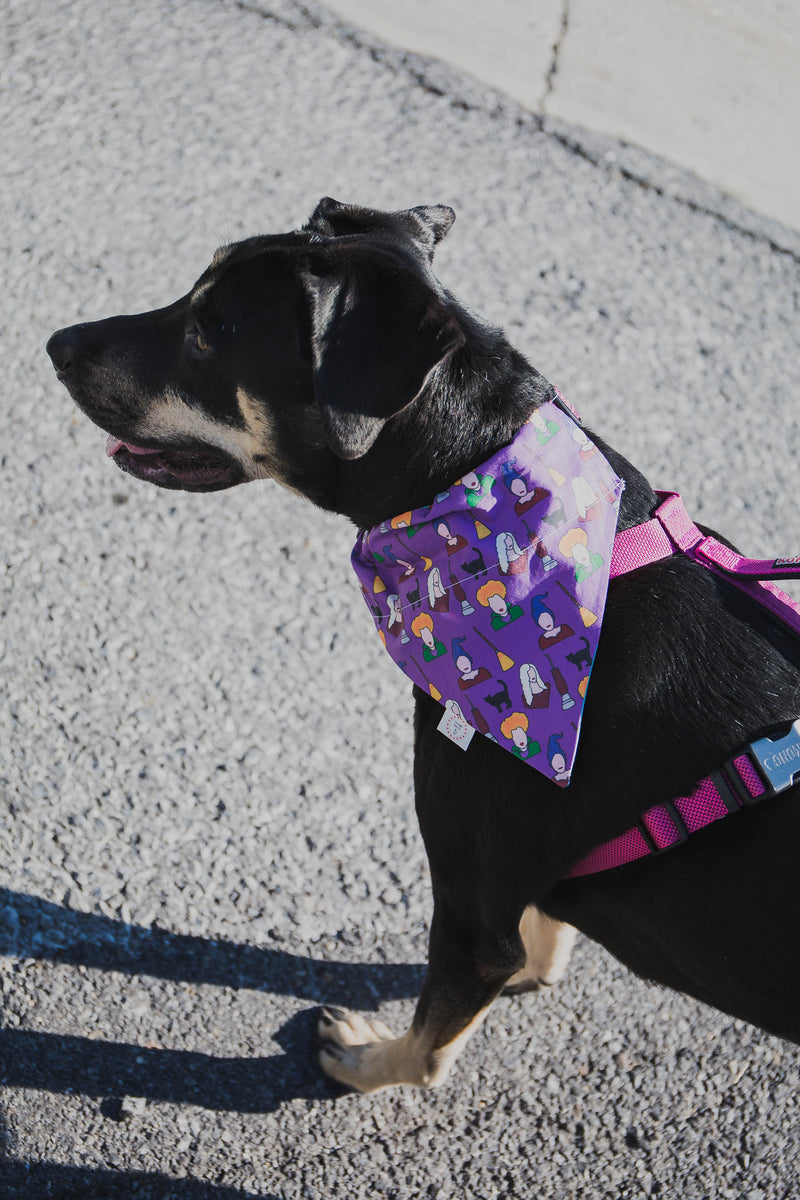 Autumn Dog Bandana - Chicago Dog (FINAL SALE)