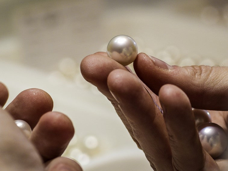 A single Australian South Sea pearl