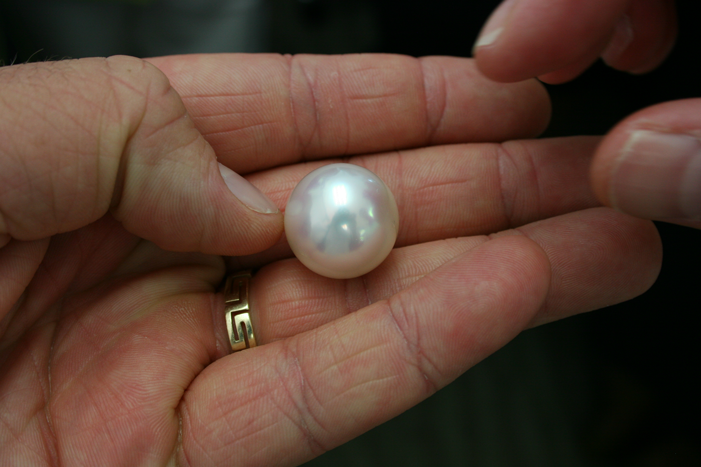 White South Sea Pearl in Hand
