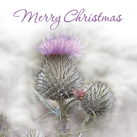 Christmas Card Pack - Frosted Thistle