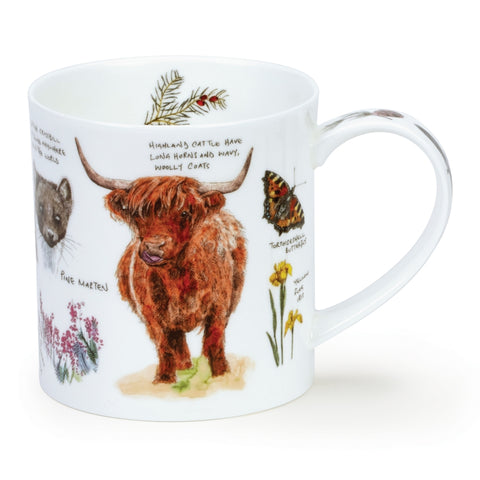Dunoon Orkney - Highland Cow