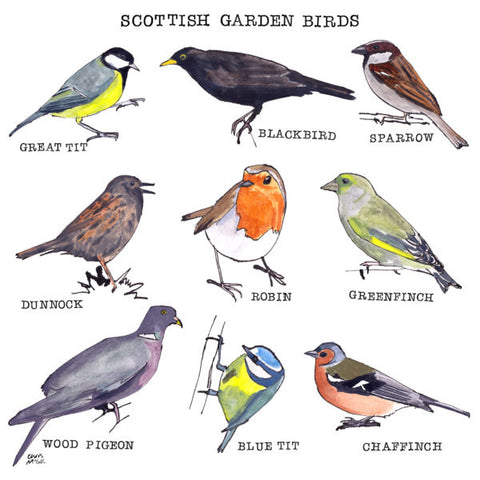 Scottish Garden Birds Note Card