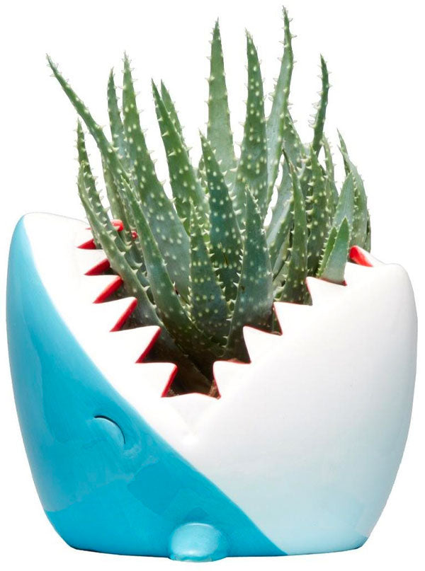 Shark Planter (Light Blue)