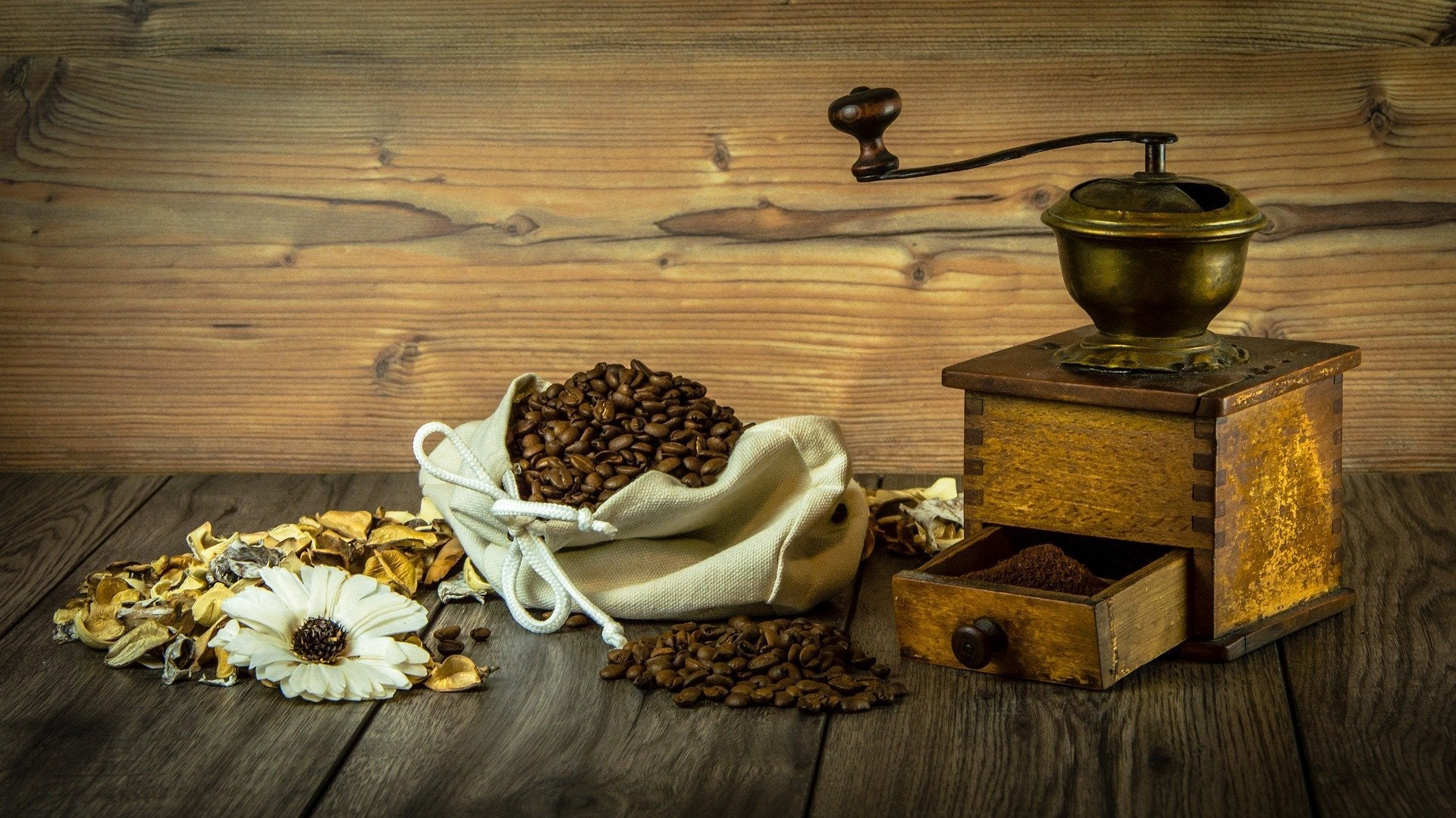 Which Type of Coffee Grinder is the Best?