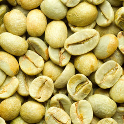 Green Coffee Green Coffee Beans Raw Unroasted Coffee Beans