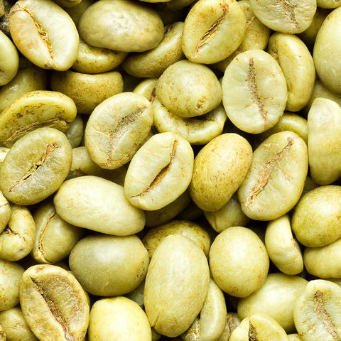 Green Coffee Vietnam Robusta Coffee Beans Wholesale Java Bean Plus
