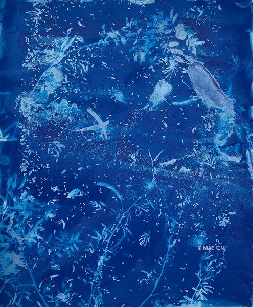 Calliandra Californica - n. 3 (2016) - Cyanotype