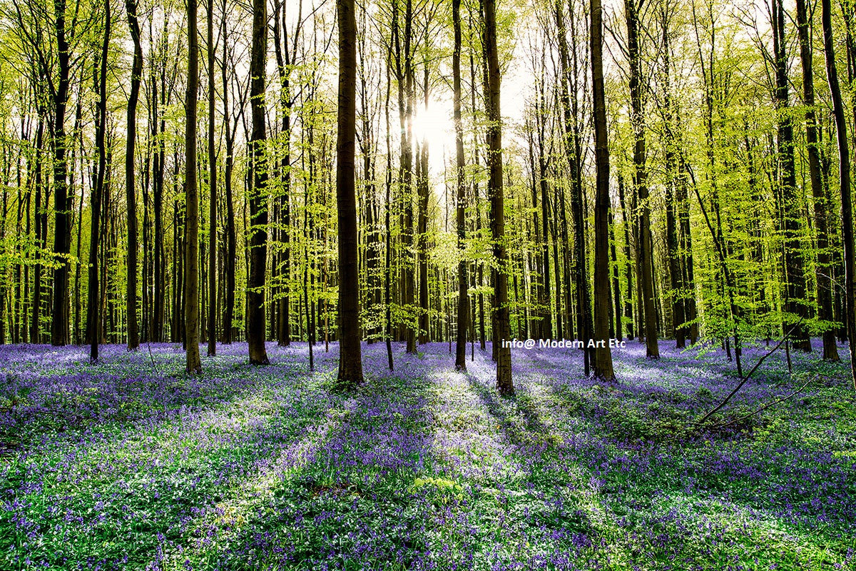 "Landscape - Lush forests in Europe ""Tranquility"" - large ready to install photography"