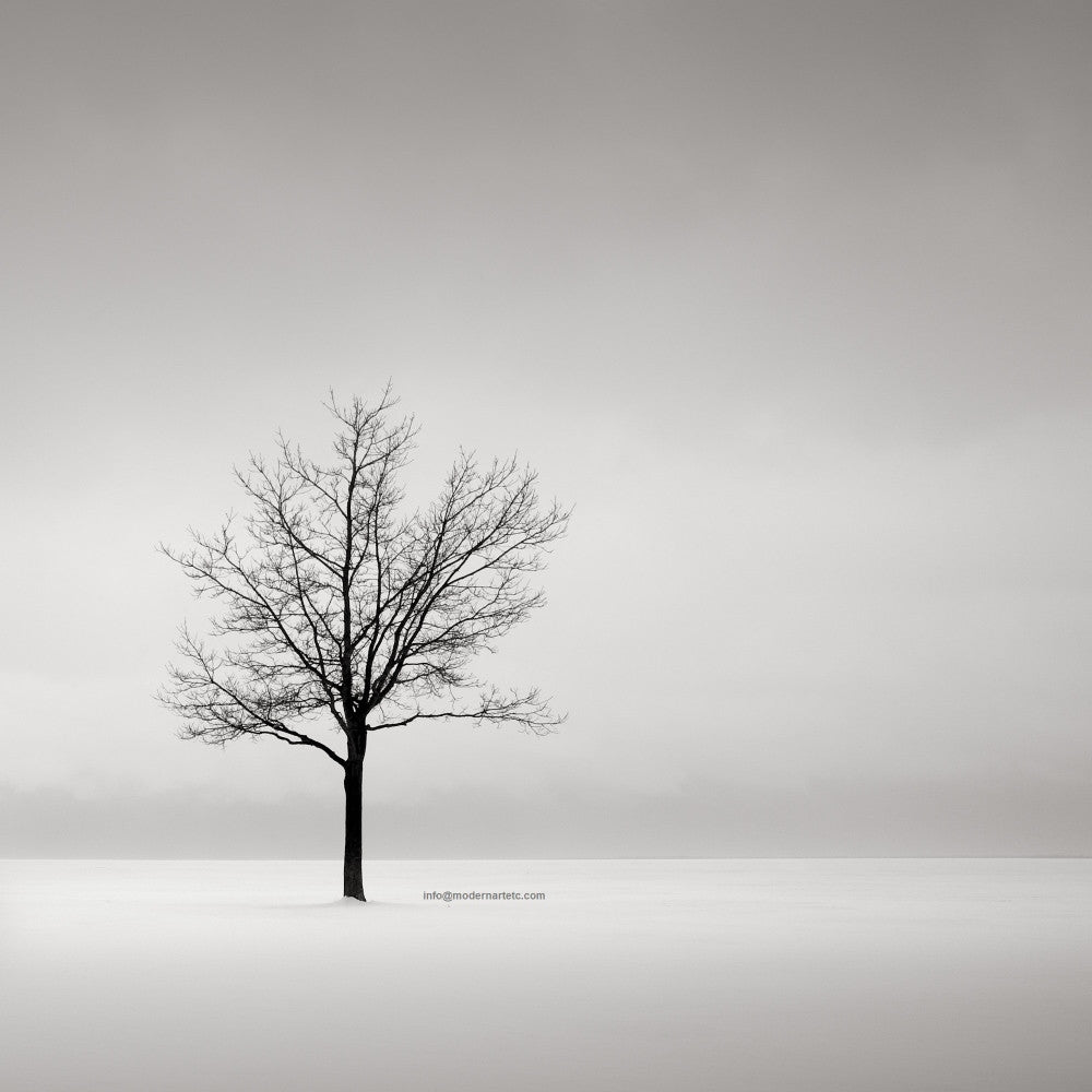Black and White series - Solitude and Nature