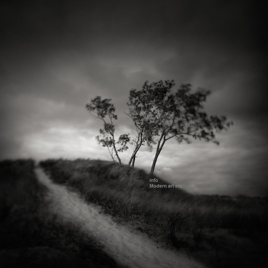 "Black and White series - Solitude and Nature, ""Path"""