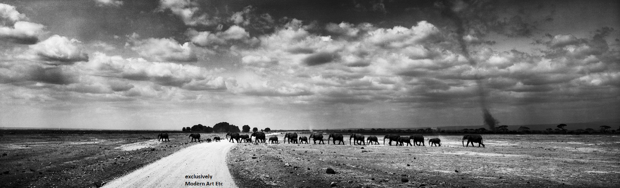 Black & White Wildlife - Elephants - Kenya - William Chua