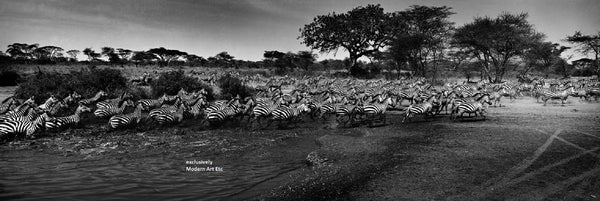 Black & White Wildlife - Migration of Zebras -2010, Serengeti, Tanzania - William Chua