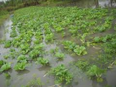 About the recent heavy rains and what it means for your food supply