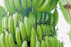 Green Banana - Farmgate E-Market