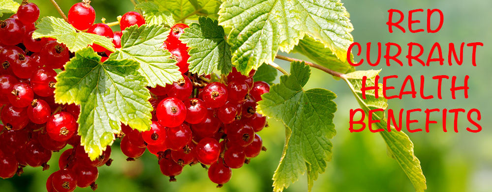 Red Currants for Beautiful Skin