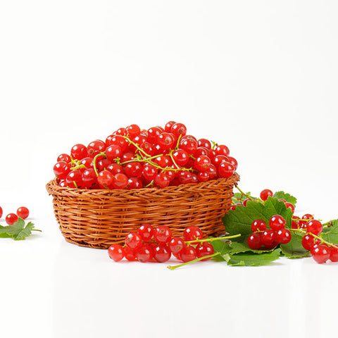 Red Currant in a basket Pamper by Nature