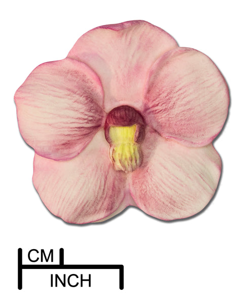 Orchid, Large