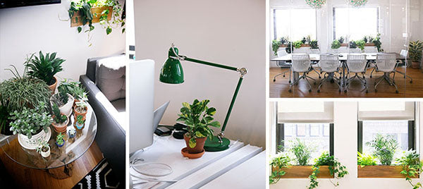 4 Benefits Of Having Plants In Your Office Space