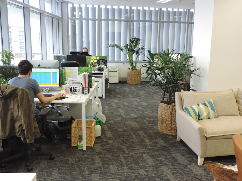 Local Web Office Fitout - Bondi Junction - Sydney - NSW