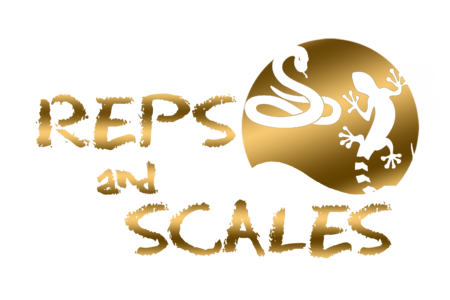Reps And Scales