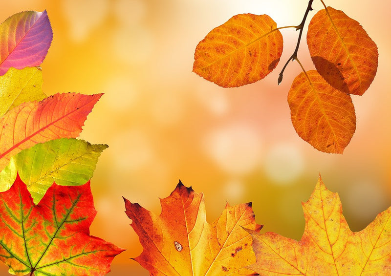 Autumn Colors Fragrance Oil