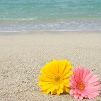 Beach Daisies - Premium Fragrance Oil