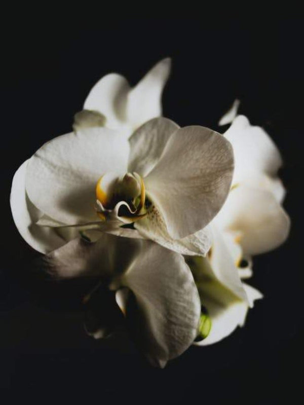Black Orchid (Tom Ford type) best fragrances for candles