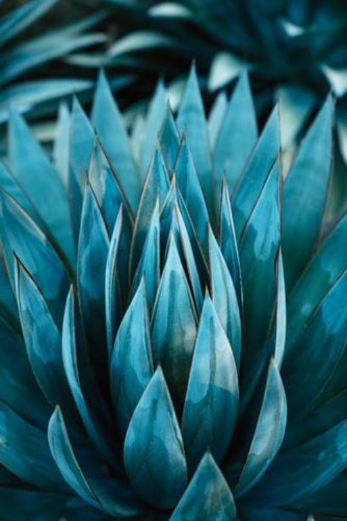 Blue Agave Nectar best wholesale candle fragrance