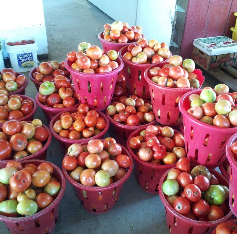 Farmstand Apple Bath and Body Works type fragrance oil